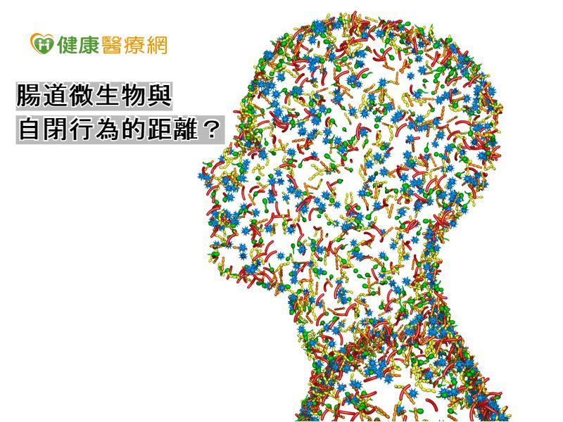 腸道微生物 老鼠研究:與自閉行為有關