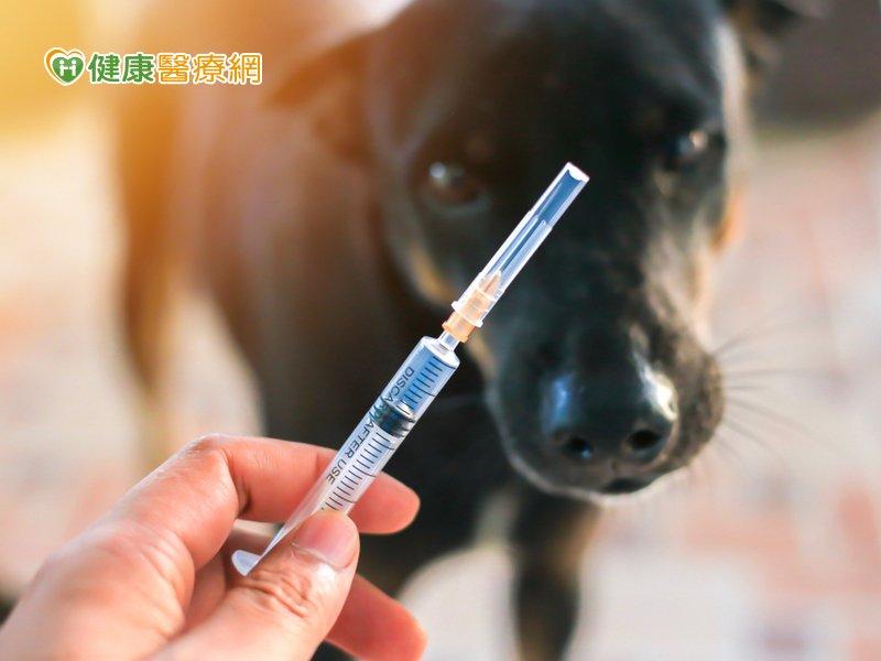 動物咬傷擔心狂犬病?「毛小孩」接種疫苗是預防關鍵