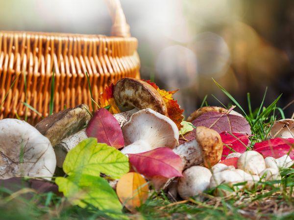 菇菇好營養 哪些人不能吃?