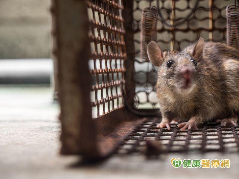 馬達加斯加大規模鼠疫 疫情提升第一級注意