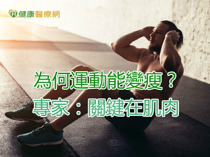為何運動能變瘦? 專家:關鍵在肌肉