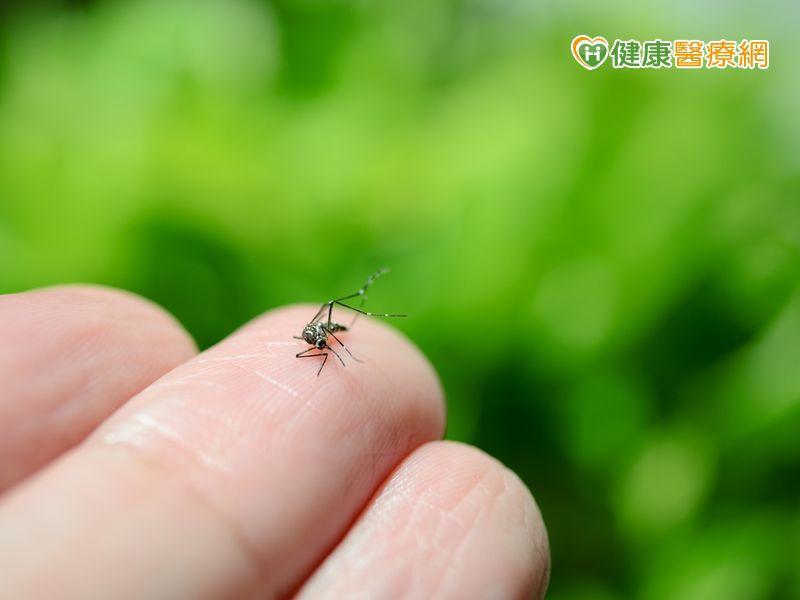 新增2本土登革熱病例 加強防蚊與環境清潔