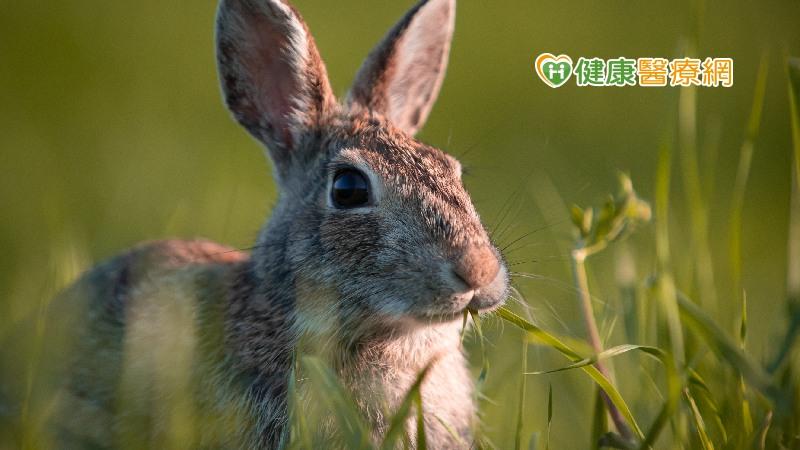 國內發現首例兔熱病 慎防節肢動物叮咬,避免接觸野生動物