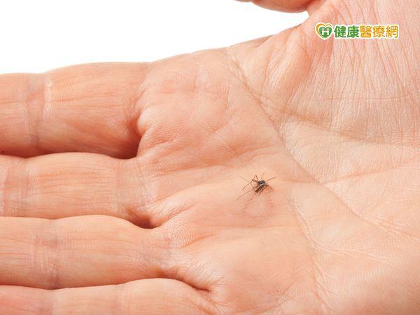 蚊子愛胖子 多吃「硫化物」食物遠離擾人蚊