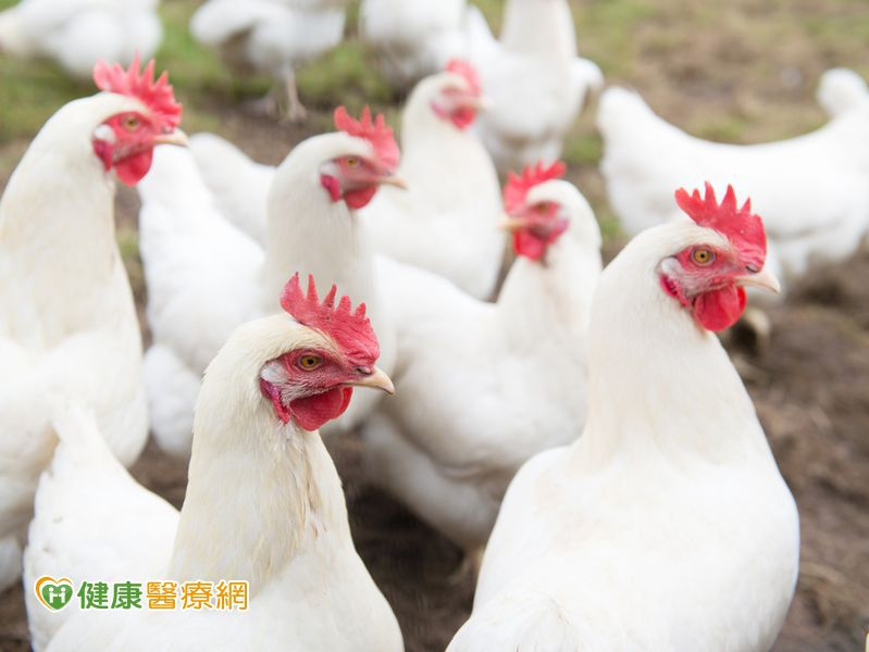 中國H7N9病例持續增加 避免接觸禽鳥及活禽市場