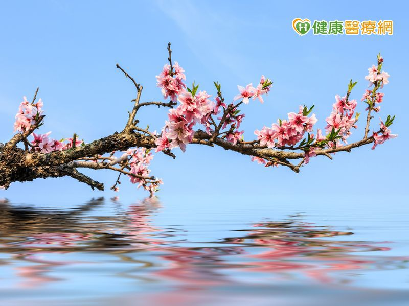 春天氣候變化多端 小心「桃花癲」發作